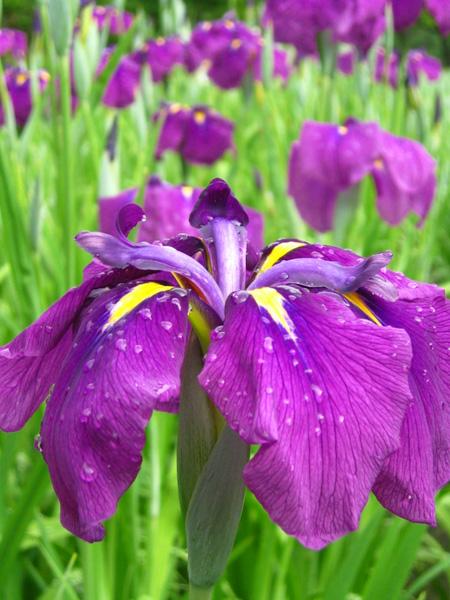 これ何の花